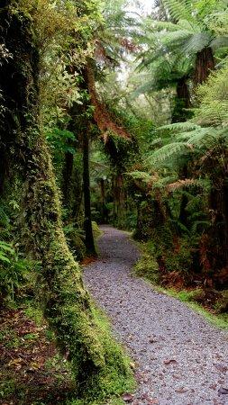 Fox Glacier, Nueva Zelanda: Giant ferns along the track