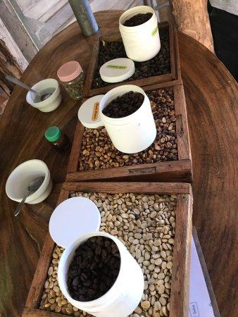 Coffee Tour El Cafetal: photo3.jpg