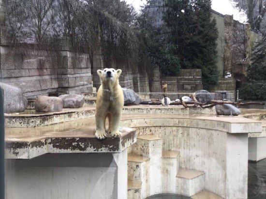 Zoo Wuppertal: photo0.jpg