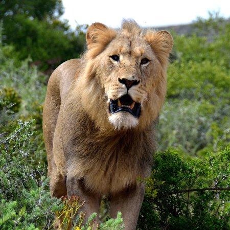 Shamwari Game Reserve 사진