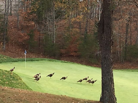 Burkesville, KY: Turkeys on the 18th hole
