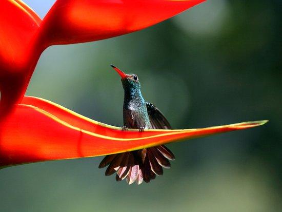 La Virgen, Costa Rica: Hummingbird