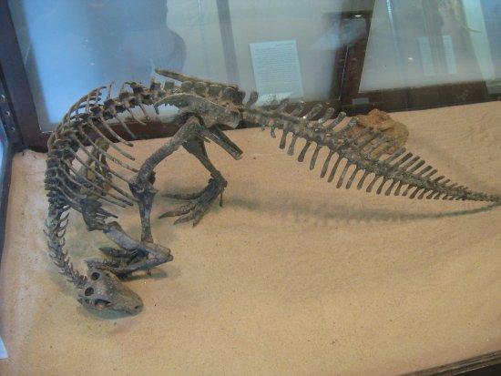 Atoka, OK: Dinosaur skeleton