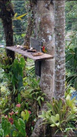 Finca Lomazul Birdwatching Farm