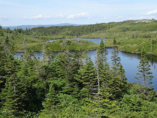 Στέφενβιλ, Καναδάς: Barachois pond provincial park NL