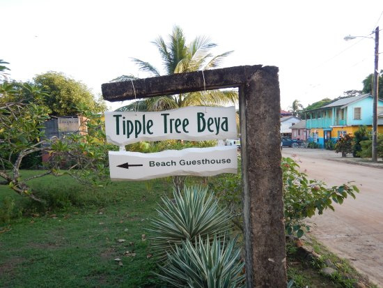 Tipple Tree Beya لوحة