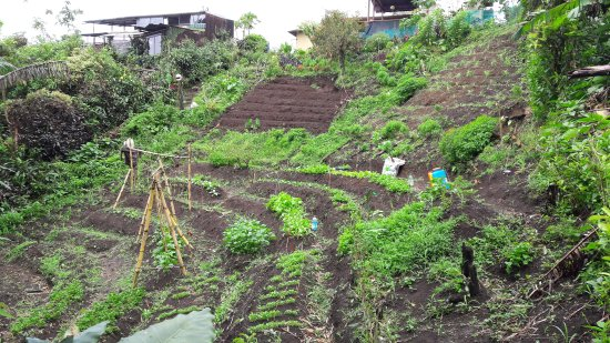 Nuevo Arenal, Kosta Rika: La Farmacia Organica