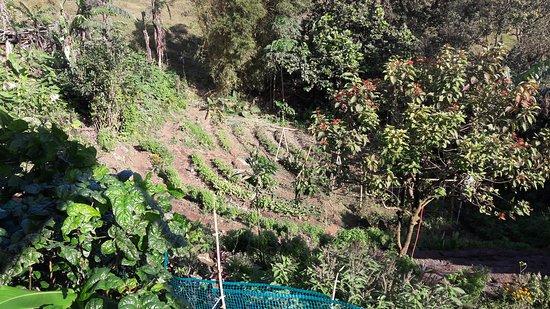 Nuevo Arenal, Costa Rica: La Farmacia Organica