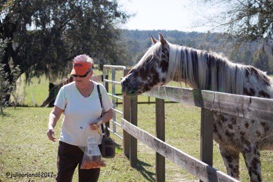 Alachua, FL: Mom feeding carrots to one of the horses