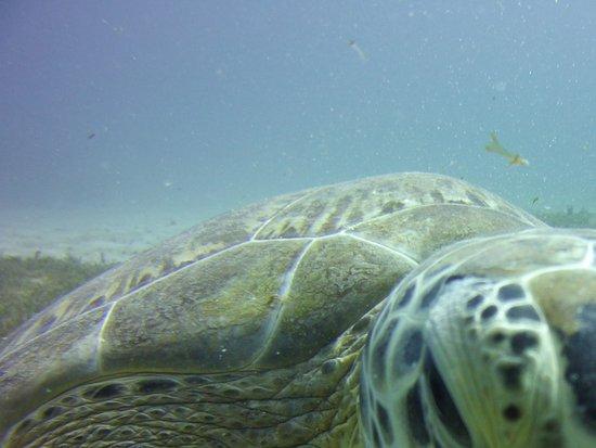 Simpson Bay, St. Maarten-St. Martin: Plenty of beauty beneath the sea