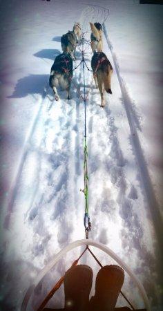 Les Bois, Schweiz: Initiation à la conduite de chiens de traîneaux, vu depuis la position assise dans le traîneau