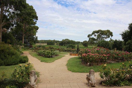 Lyndoch, أستراليا: well organized fields