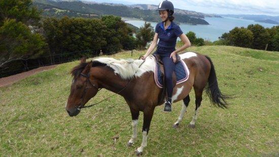 Ilha Waiheke, Nova Zelândia: Waiheke Horse Tours