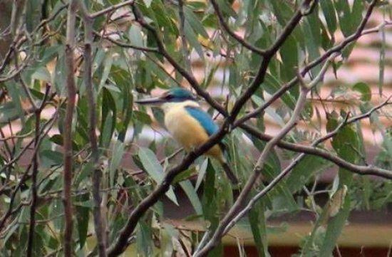 Fawkner, Australia: Bababi Djinanang Native Grasslands Reserve