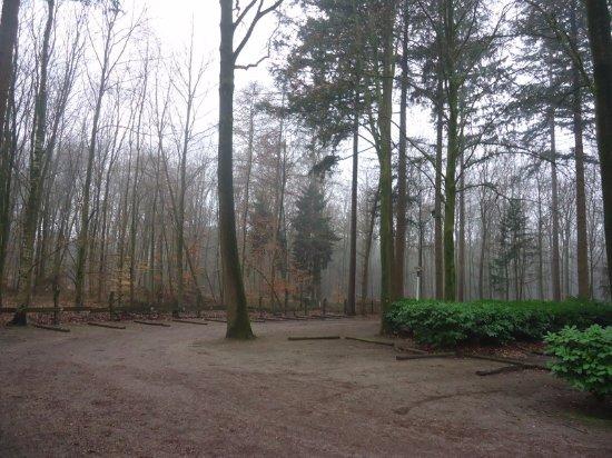 Putten, Países Baixos: In het bos, aan doorgaande weg, genoeg parkeerplekken