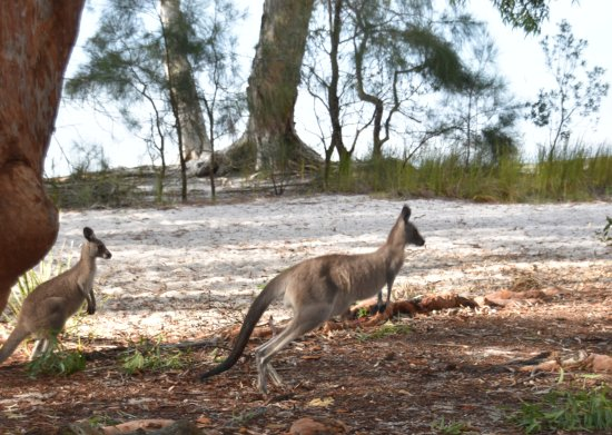 Myall Lakes National Park Foto