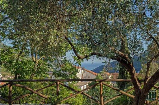 Tramonti, Italy: Villa Citarella