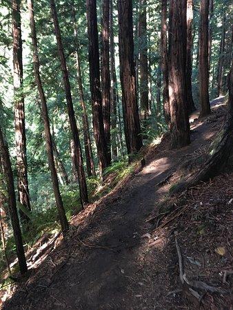 Mill Valley, CA: photo2.jpg