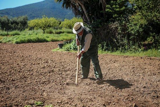 Monte Argentario, Italy: Preparativi per l'orto