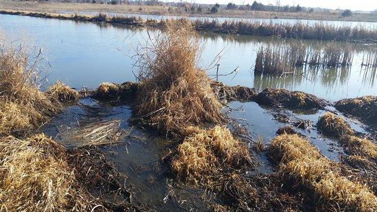 Gardner, Kansas: KCPL Prairie Wetlands