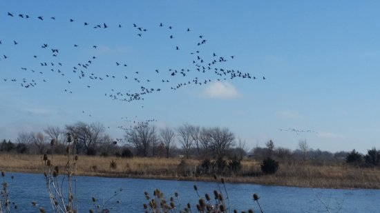 Gardner, Канзас: KCPL Prairie Wetlands