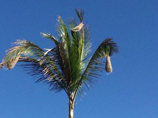 Punta Bejuco, بنما: photo0.jpg