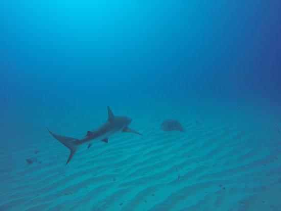 Blue Odyssey Diving: photo7.jpg