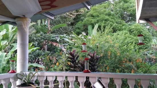 On the porch of Mariposa Cafe - Picture of Cafe Mariposa, Lopinot ...