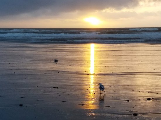 Pelican Shores Inn : walking on the beach at sunset