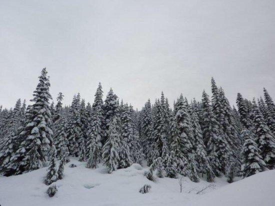 Agassiz, Canada: photo1.jpg