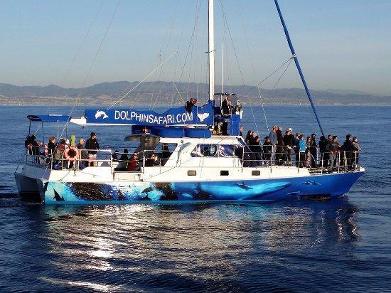 Dana Point, Californien: High-tech whale watching catamaran sailboat Manute'a