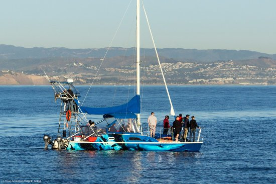 Dana Point, Californien: DolphinSafari, the whale watching catamaran made famous in Captain Dave's award winning document
