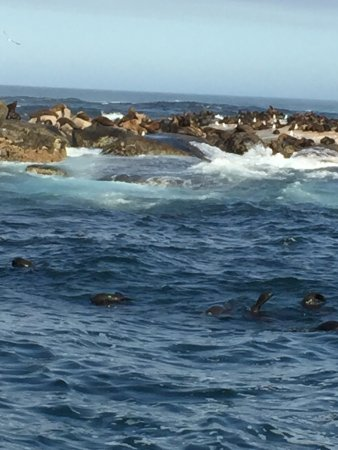 Hout Bay, South Africa: Watch the seal up close