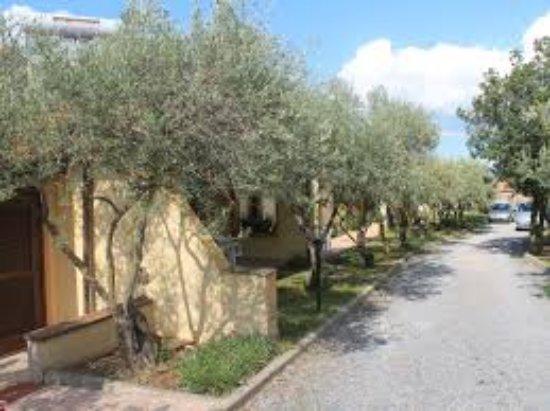 Villamassargia, İtalya: images-45_large.jpg