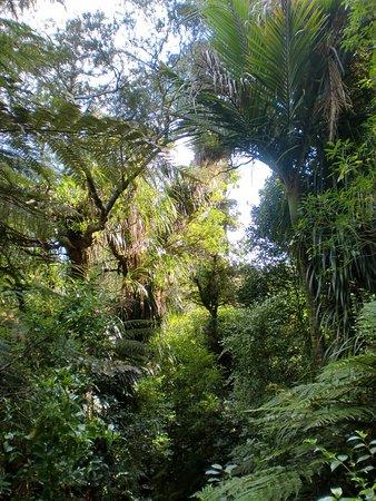Kauaeranga Valley Visitor's Centre : wunderschöne Fauna auf dem Pinnicles Track ( Kauaeranga )