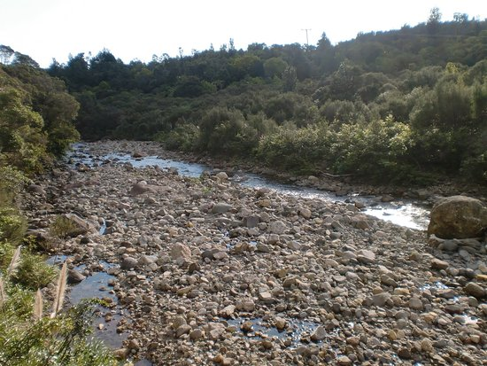 Kauaeranga Valley Visitor's Centre : Bachbett auf dem Pinnicles Track ( Kauaeranga )