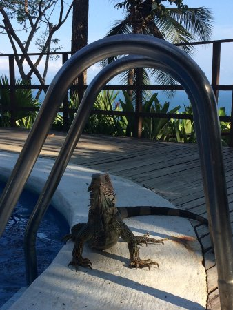 Lapa Rios Ecolodge Osa Peninsula : View from the terrace at sunrise and George, the resident iguana at the time of his drink.