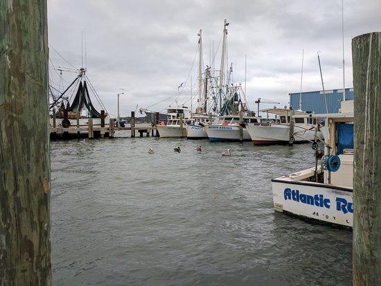 Safe Harbor Seafood Market & Restaurant: shrimpers behind Safe Harbor