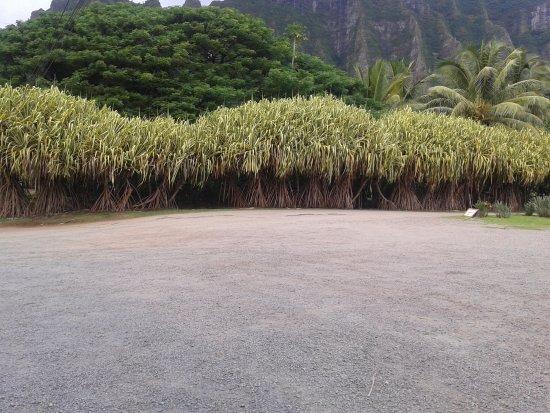 Kaneohe, ฮาวาย: la vegetazione attorno
