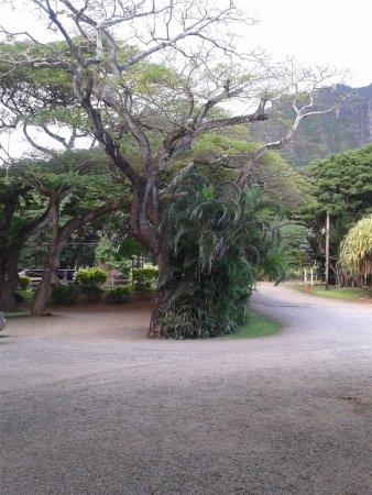 Kaneohe, ฮาวาย: tipico albero