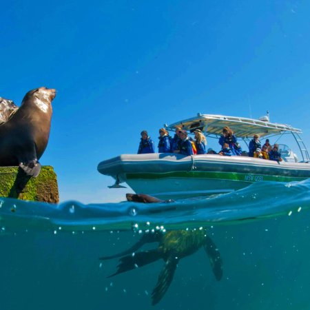 Queenscliff, Australia: Underwater Seals