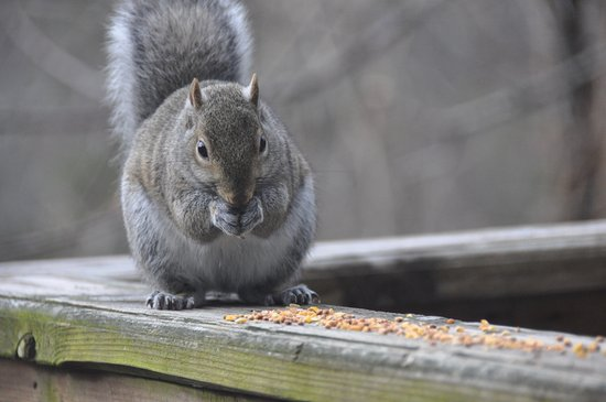 Treehouse Cottages: Squirrel