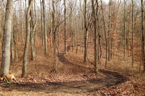 Oakdale, PA: One of the cleared paths through the woods