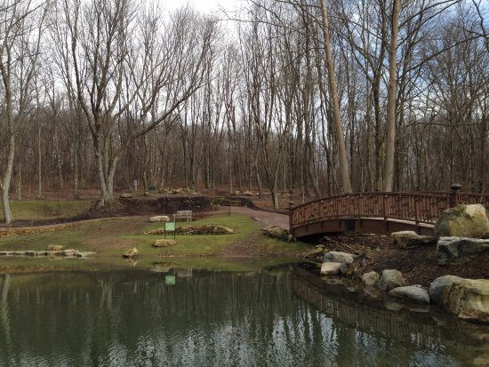 Oakdale, PA: Lotus Pond, January 2017