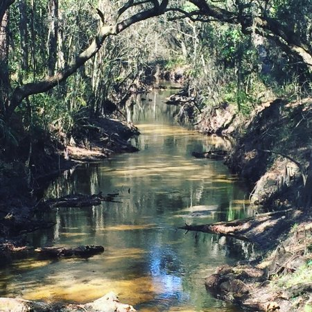 Lower Green Swamp Reserve