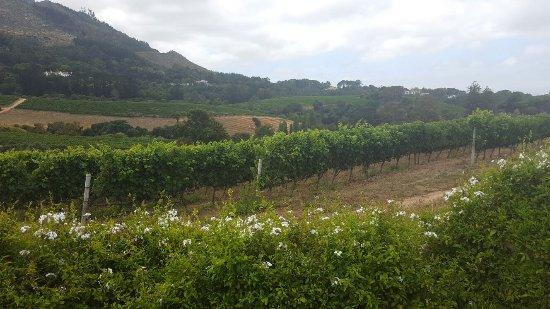 Constantia, Sydafrika: Glan - Paradies