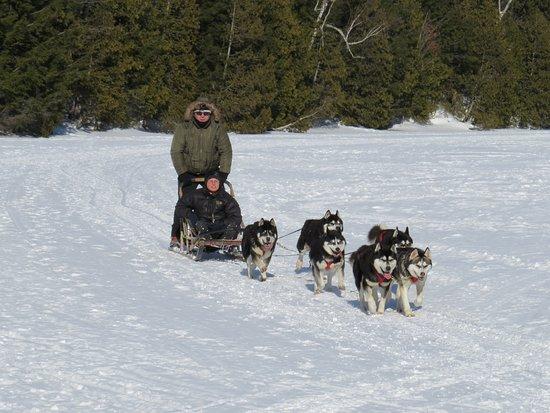 Saint Hippolyte, Canadá: Traîneaux à chiens