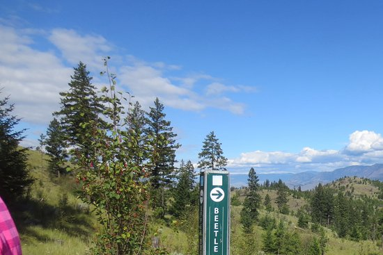 Kamloops, Canada: Trails are well marked
