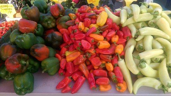 Hamburg, NY: All sorts of Peppers!