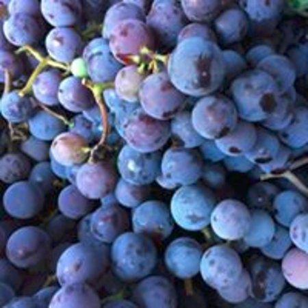 Hamburg, NY: Local concord grapes!